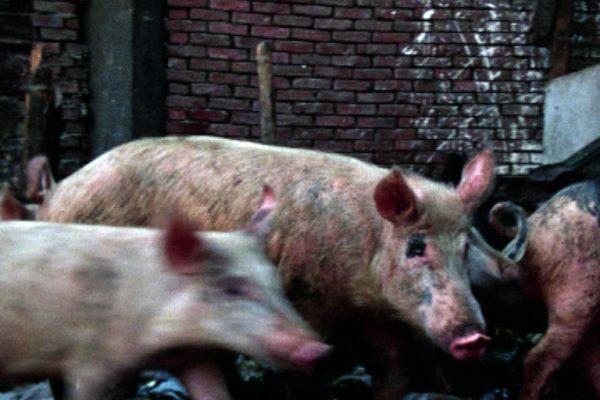 45-pigs-stones-still-2ps_orig